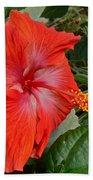 Red Hibiscus Flower Beach Towel