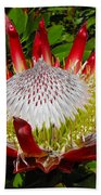 Red King Protea Beach Towel