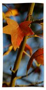 Red Leaves In Winter Sunset Beach Towel