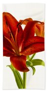Red Lily Number One Square Beach Towel