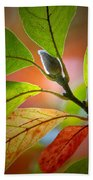 Red Magnolia Leaves With Bud Beach Towel