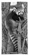 Red Panda 2 Monochrome Beach Towel