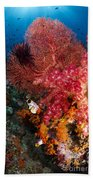 Red Sea Fan And Soft Coral In Raja Beach Towel