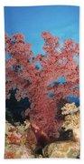 Red Soft Coral,  Australia Beach Towel