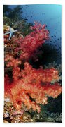 Red Soft Corals And Blue Leather Sea Beach Towel