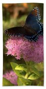 Red Spotted Purple Butterfly On Sedum Beach Towel