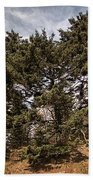 Red Spruce On Whitetop Mountain Beach Towel