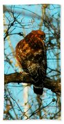 Red Tail Hawk Visitor Beach Towel