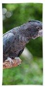 Red-tailed Black-cockatoo Beach Towel
