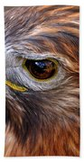 Red-tailed Hawk Close Up Beach Sheet