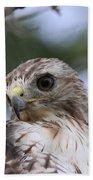 Red-tailed Hawk Has Superior Vision Beach Sheet