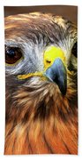 Red-tailed Hawk Portrait Beach Sheet