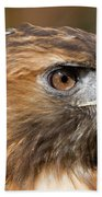 Red-tailed Hawk Portrait Beach Towel