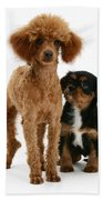 Red Toy Poodle And Cavalier King Beach Towel
