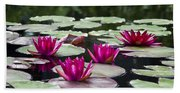 Red Water Lillies Beach Towel