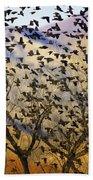 Red-winged Blackbirds At Sunset Beach Sheet
