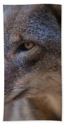 Red Wolf Stare Beach Towel