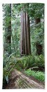 Redwood National Park, California Beach Towel