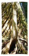 Redwood Trees Forest Art Prints Redwoods Beach Towel