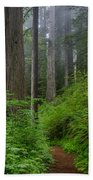 Redwoods Along Ossagon Trail Beach Towel