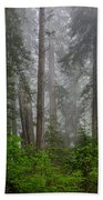 Redwoods In Breaking Mists Beach Towel