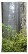 Redwoods In May Beach Towel