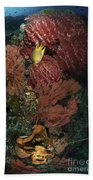 Reef Sponge Coral And Yellow Fish Beach Towel