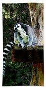 Ring-tailed Lemur Beach Towel