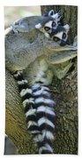 Ring-tailed Lemurs Madagascar Beach Towel