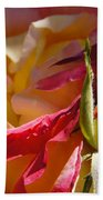 Rio Samba Rose And Bud Beach Towel