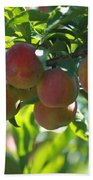 Ripe Fleshy Plums On The Branch Beach Towel