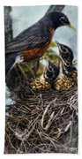 Robin And Babies In Nest Beach Towel