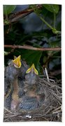 Robin Nestlings Beach Towel by Ted Kinsman