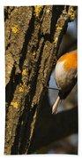 Robin On Tree Beach Towel