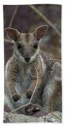 Rock Wallaby V2 Beach Towel