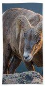 Rocky Mountain Big Horn Ram Beach Towel