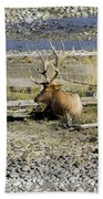 Rocky Mountains Elk Beach Towel