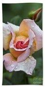 Rose Flower Series 11 Beach Sheet