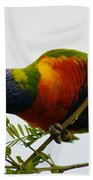 Rosella Splendour  Beach Towel