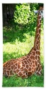 Rothschild Giraffe Beach Towel