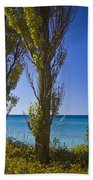 Row Of Cypress Trees At Point Betsie In Michigan No.0924 Beach Towel