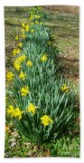 Row Of Daffodils Beach Towel