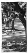 Row Of Oaks - Black And White Beach Towel
