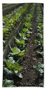 Rows Of Cabbage Beach Towel