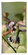 Ruby-throated Hummingbird - An Altercation Beach Towel