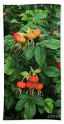 Rugosa Rose With Rose Hips Beach Towel