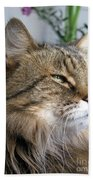 Runcius- My King Kitty Enjoying The Sunshine Beach Towel