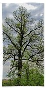 Rural Trees I Beach Towel