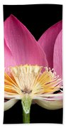 Sacred Lotus Nelumbo Nucifera Beach Towel