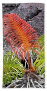 Sadleria Fern Hawaii Beach Towel